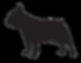 Bouledogue Francesi, Allevamento, Cuccioli, Lombardia, Italia, Disponibili, Vendo, GropelloCairoli, Pedigree, Enci, Expò, Cane, Razze, Cuccioli