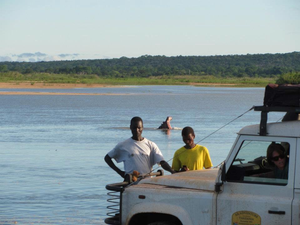 Hippo in the Rovuma River
