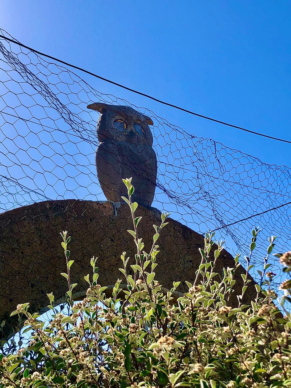 Two faced owl Art brut Owl House
