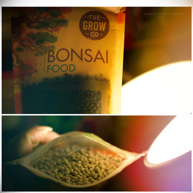 The food/fertilizer my Ginseng Ficus Bonsai adores
