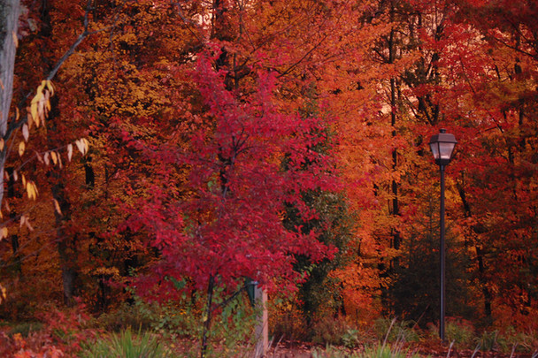 Fall color - The Woodlands