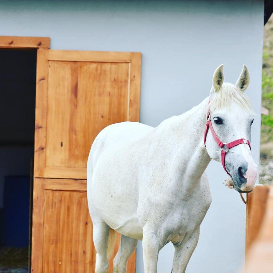 Ankara At çiftlik kahvaltı