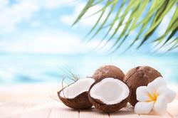 Coconuts Beach Palm Tree Ocean