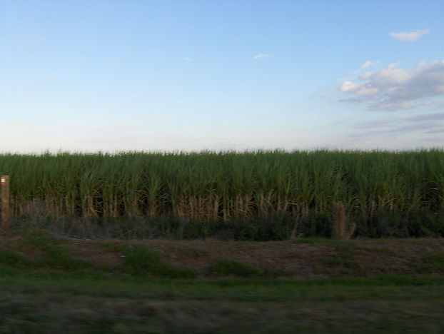 """""""They're Trying to Make It So We Walk Away"""": It's About to Get Harder to File Lawsuits Saying Sugar Harvesters Poisoned the Air"""