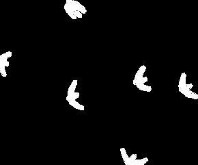 dnc-birds3.webp