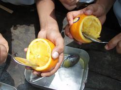 BWM Orange Egg