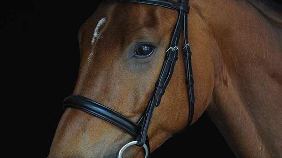 Comfort Crown Padded Raised Cavesson Bridle