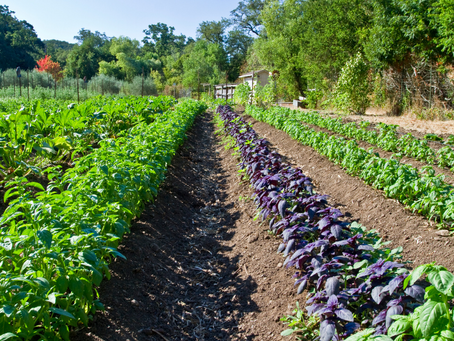 The Future of Farming is Organic