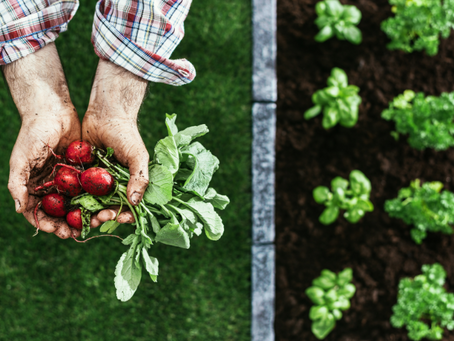 A Step-by-Step Guide to Organic Farming