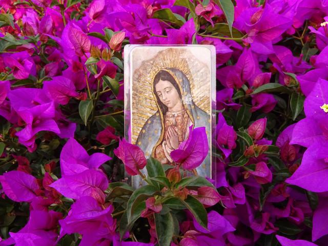 Cómo Consagramos Nuestra Familia a María Todos los Días