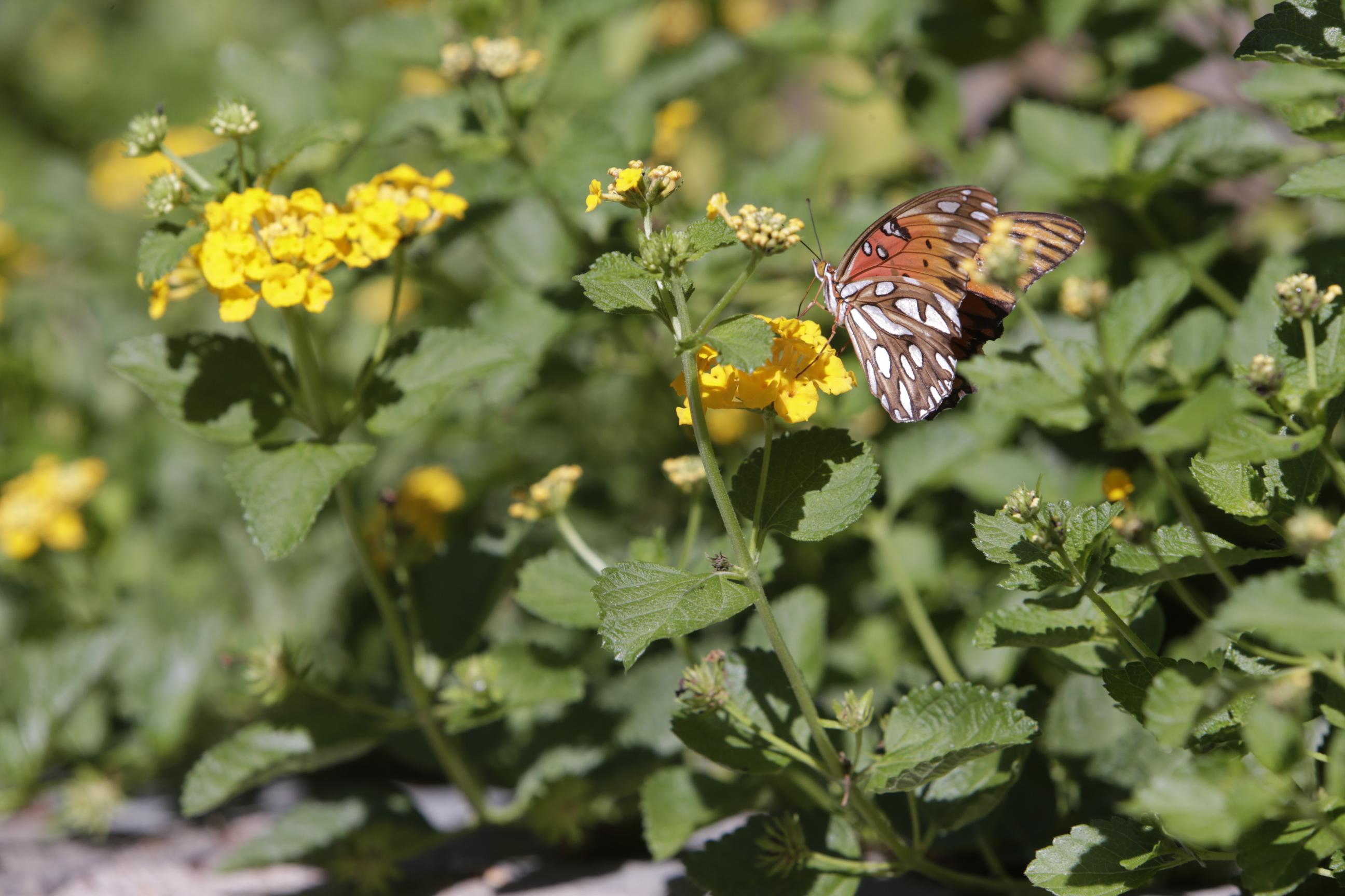 fall_monarch.JPG