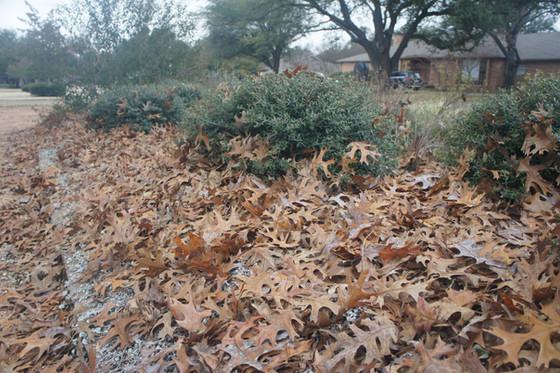 Don't remove your garden's winter coat!