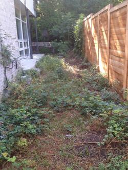 unwelcoming side yard