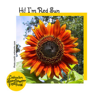Hi I'm Sunflower Template_RedSun.jpg