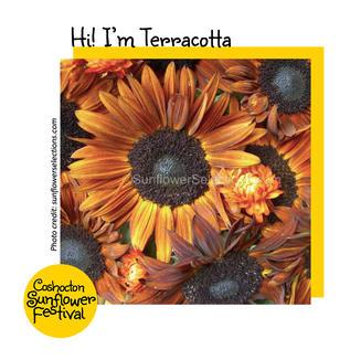 Hi I'm Sunflower Template_Terrcotta.jpg