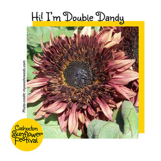 Hi I'm Sunflower Template_DoubleDandy.jp
