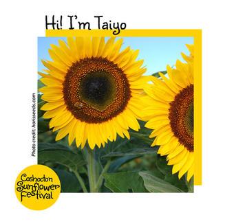 Hi I'm Sunflower Template_Taiyo.jpg