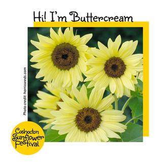 Hi I'm Sunflower Template_Buttercream.jp