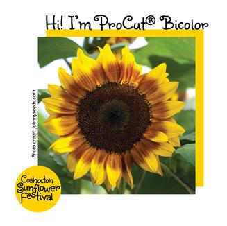 Hi I'm Sunflower Template_ProCut Bicolor