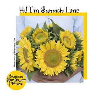 Hi I'm Sunflower Template_SunrichLime.jp