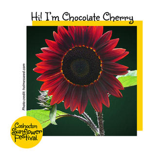 Hi I'm Sunflower Template_ChoclateCherry