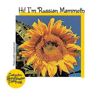 Hi I'm Sunflower Template_RussianMammoth