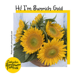 Hi I'm Sunflower Template_Sunrich Gold.j