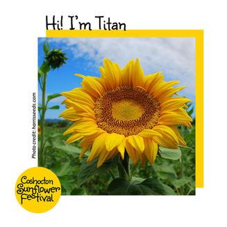 Hi I'm Sunflower Template_Titan.jpg