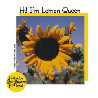 Hi I'm Sunflower Template_LemonQueen.jpg