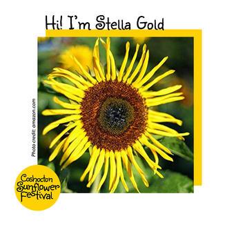 Hi I'm Sunflower Template_StellaGold.jpg