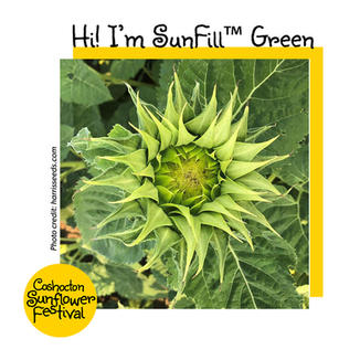 Hi I'm Sunflower Template_SunfillGreen.j