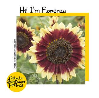 Hi I'm Sunflower Template_Florenza.png