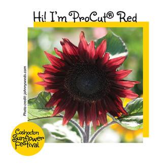 Hi I'm Sunflower Template_ProCut Red.jpg
