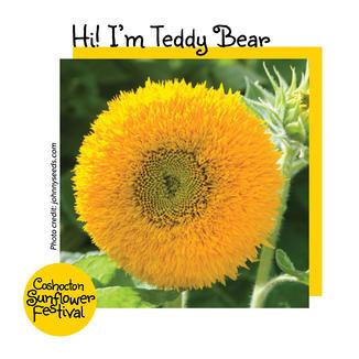 Hi I'm Sunflower Template_TeddyBear.jpg
