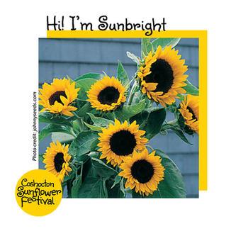 Hi I'm Sunflower Template_Sunbright.jpg