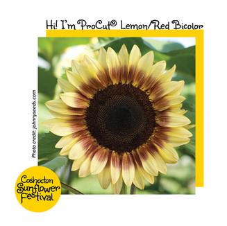 Hi I'm Sunflower Template_ ProCutLemonRe