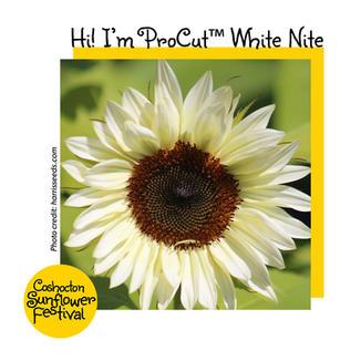 Hi I'm Sunflower Template_ProCutWhiteNit
