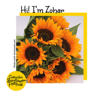 Hi I'm Sunflower Template_Zohar.jpg