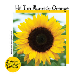 Hi I'm Sunflower Template_SunrichOrange.