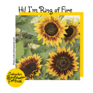 Hi I'm Sunflower Template_RingofFire.jpg