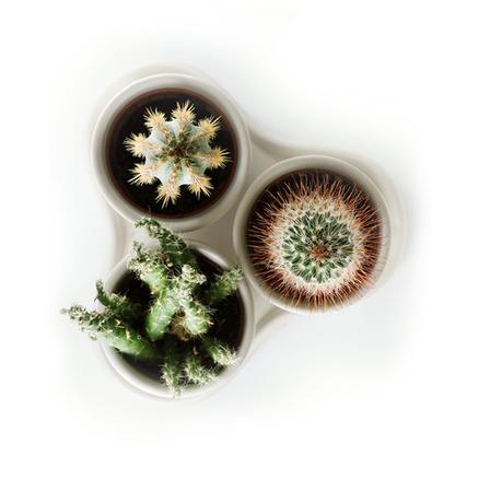 Build Your Own Succulent Planter.