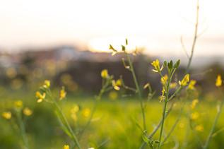 פרחים אל הנוף