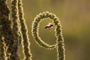 הדבורה במרכז
