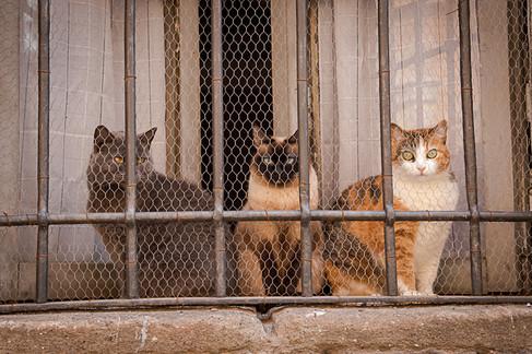 שלושה חתולים