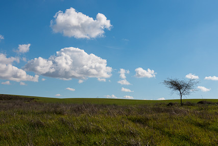 עץ בשדה
