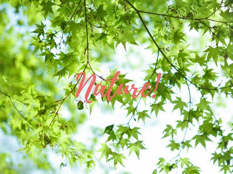 Nature & Still Life