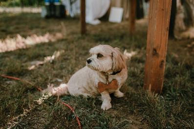 charlie-kelly-wedding-Full_Size-840.jpg