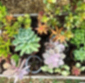 The succulents are so happy it's summert