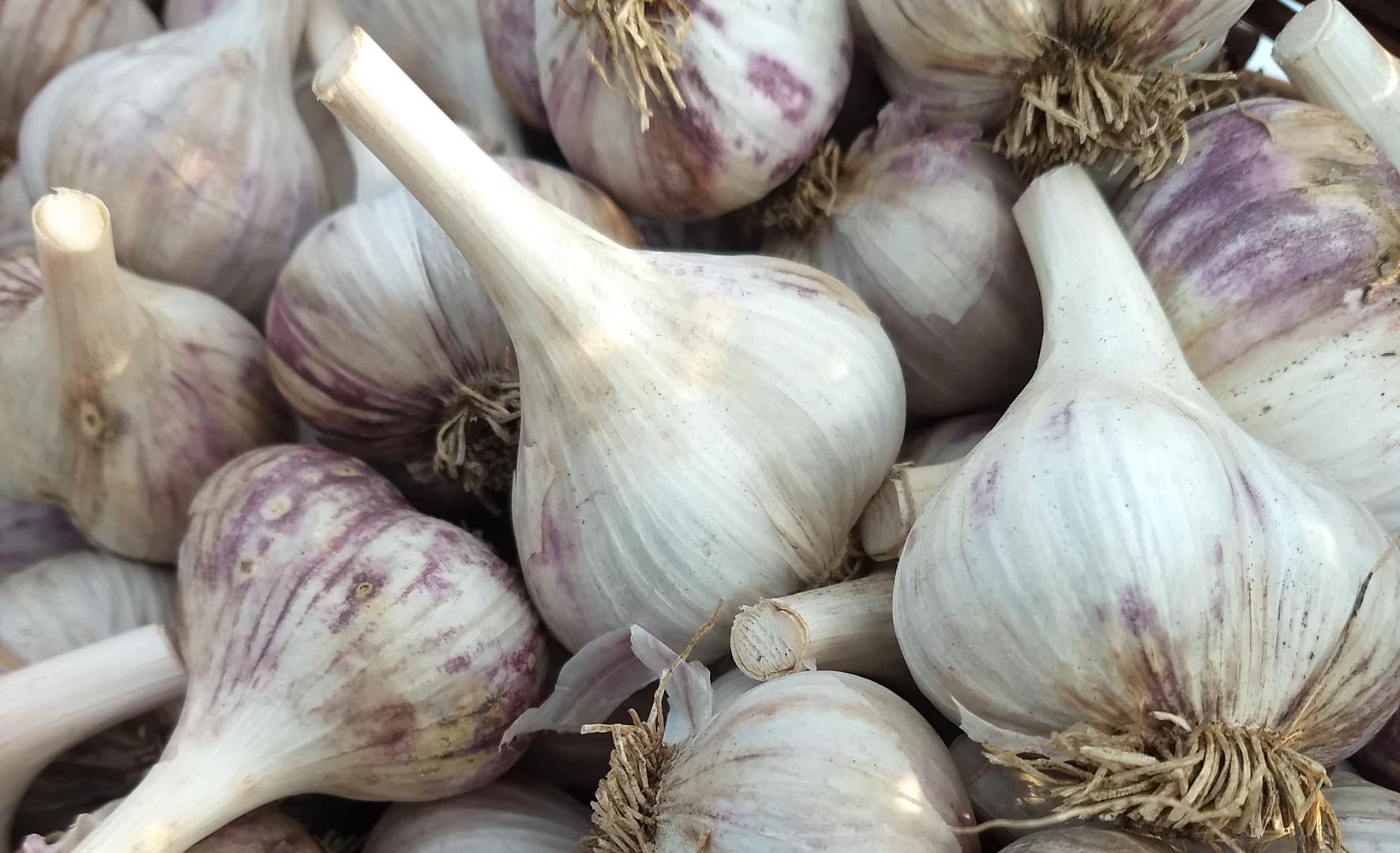 Red Russian Garlic
