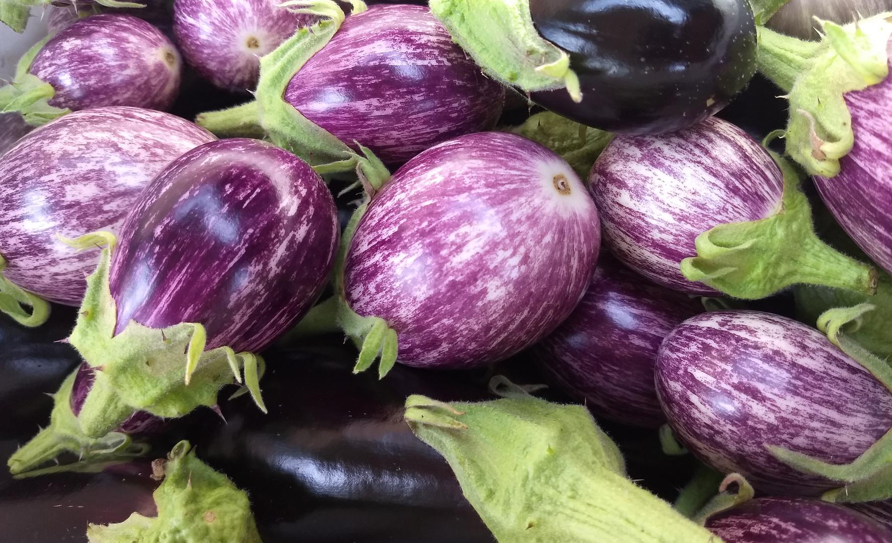 Mixed Mini Eggplants